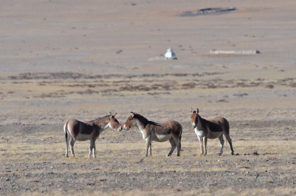 Ladakh_2015-107