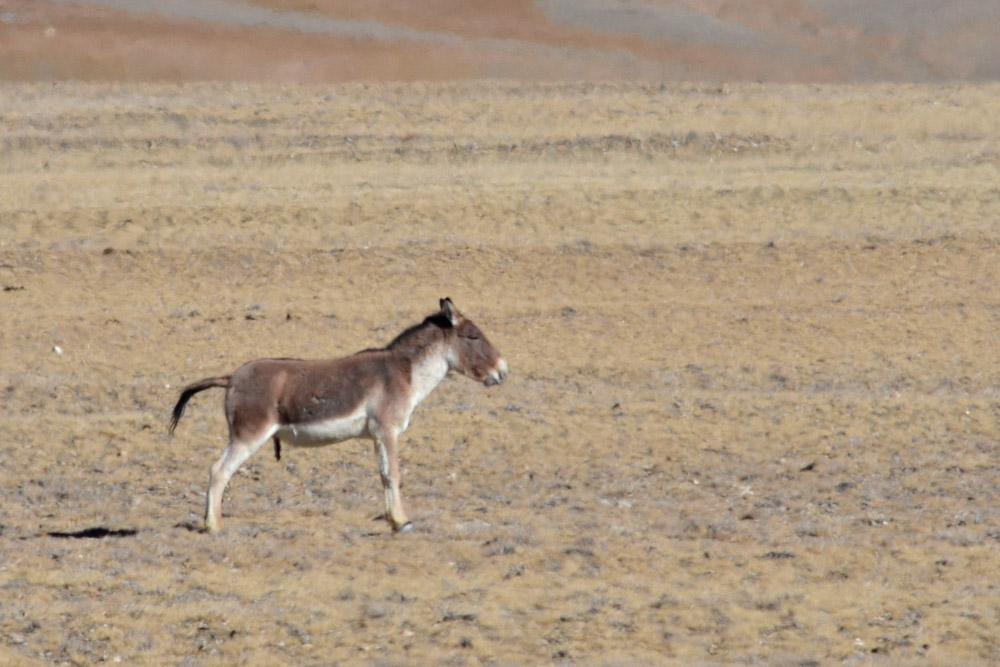 Ladakh_2015-109