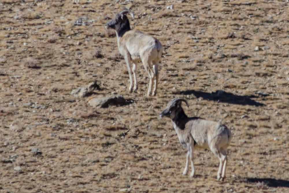 Ladakh_2015-111
