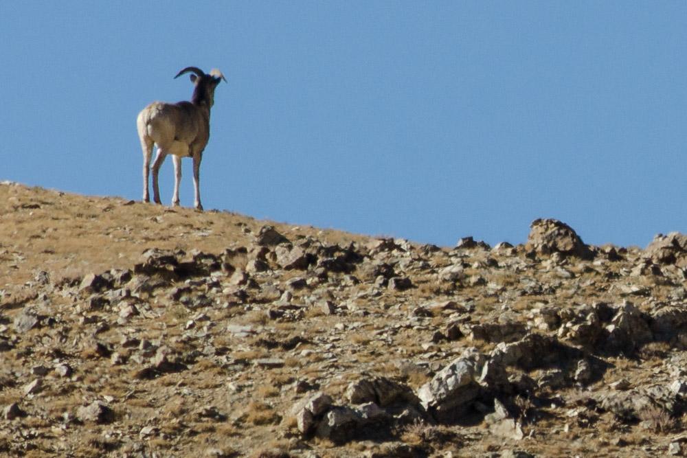 Ladakh_2015-116