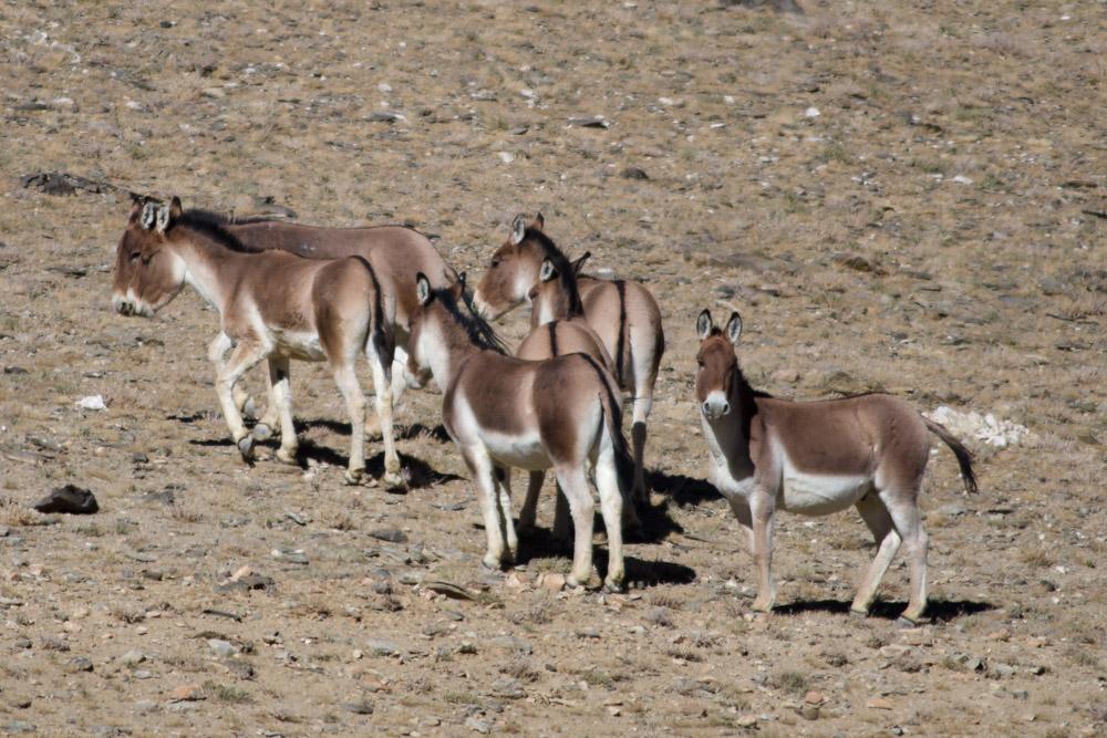 Ladakh_2015-123