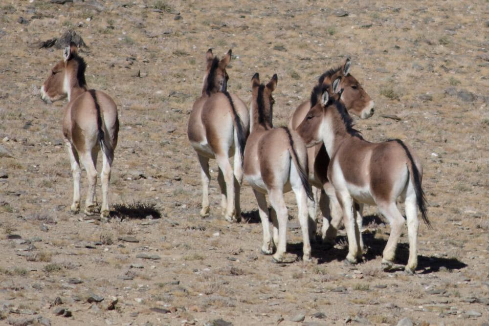 Ladakh_2015-125