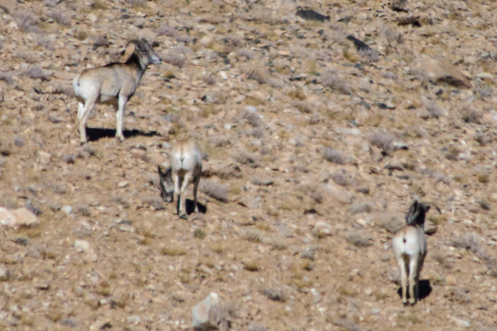Ladakh_2015-129