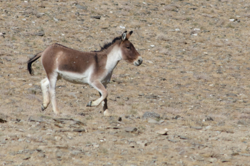 Ladakh_2015-132