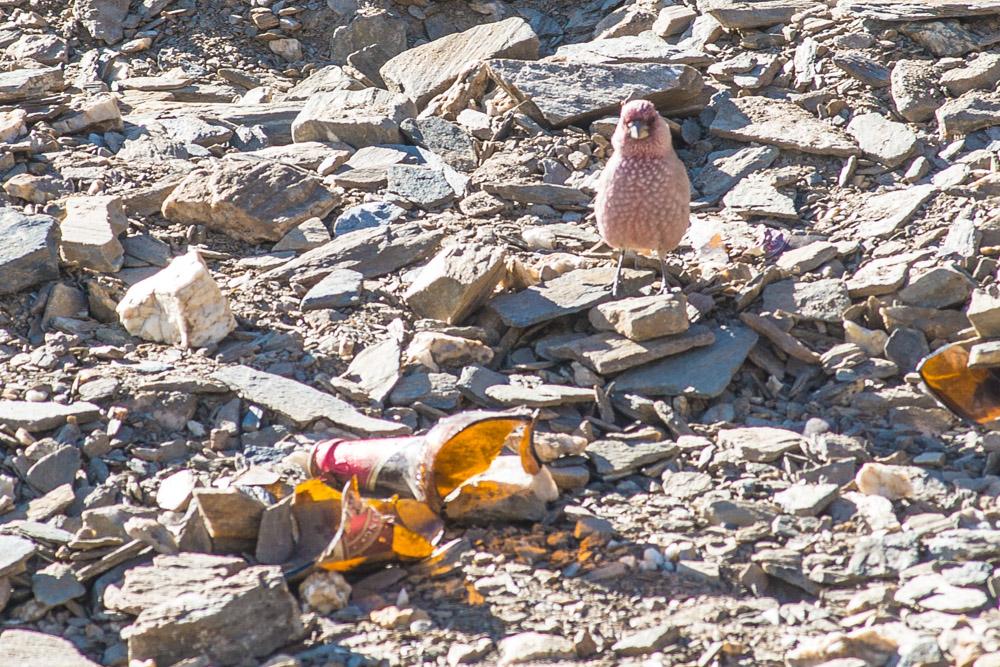 Ladakh_2015-136
