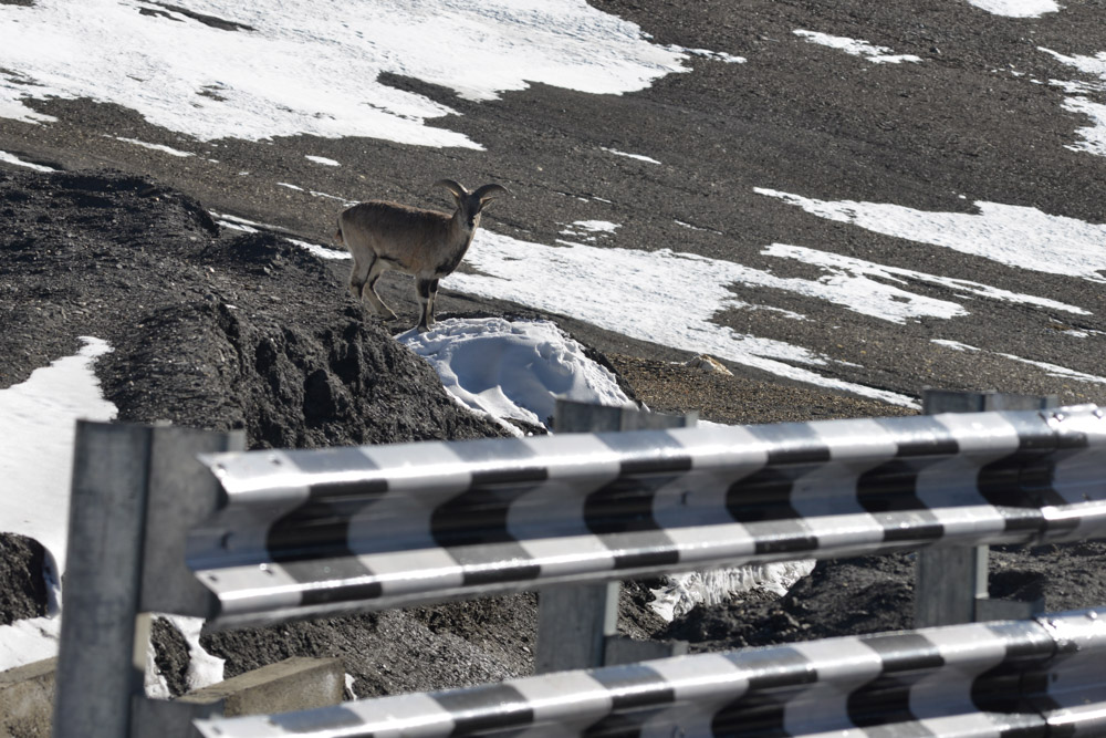 Ladakh_2015-138