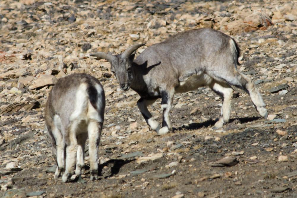 Ladakh_2015-141
