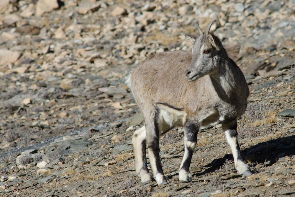 Ladakh_2015-146