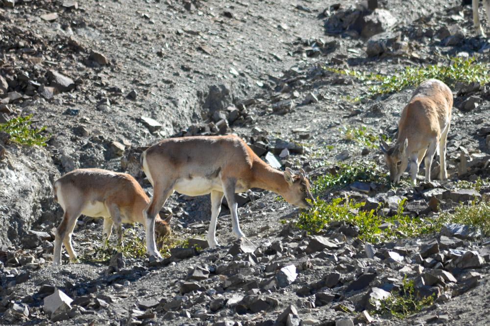 Ladakh_2015-155