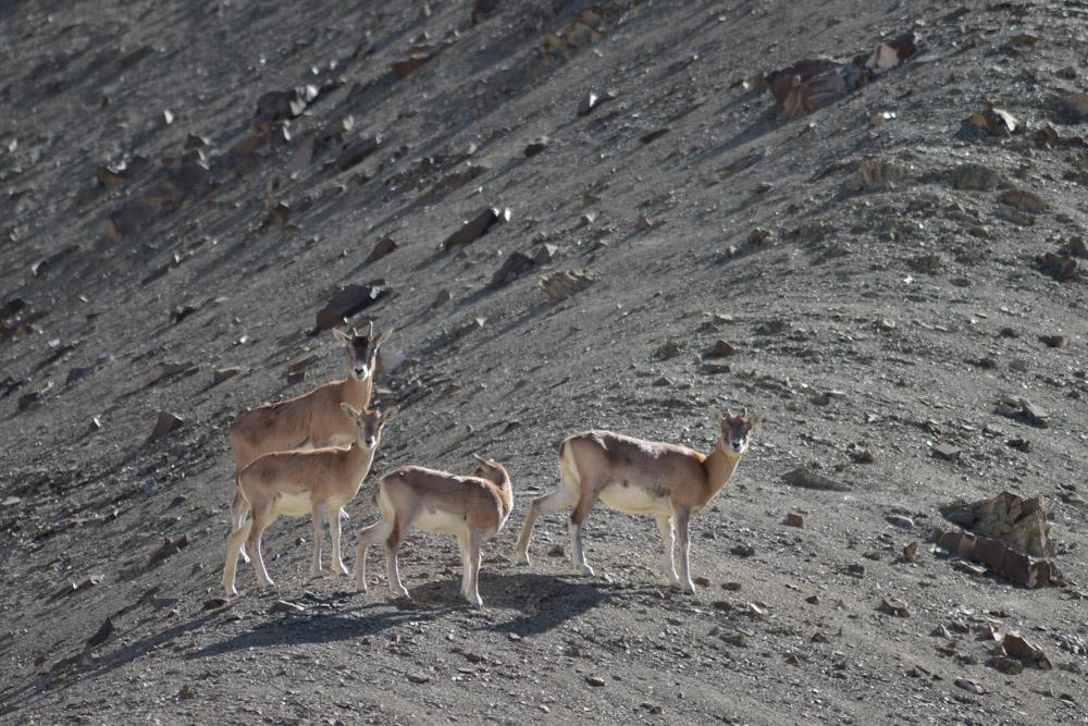 Ladakh_2015-158