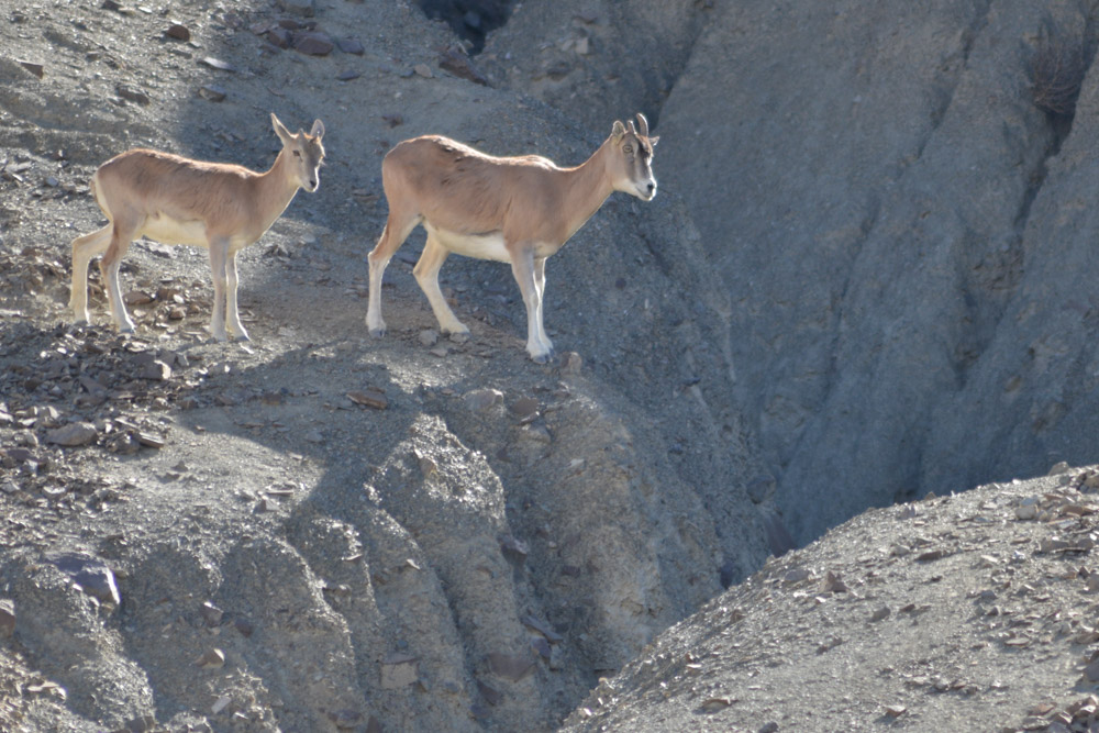 Ladakh_2015-161