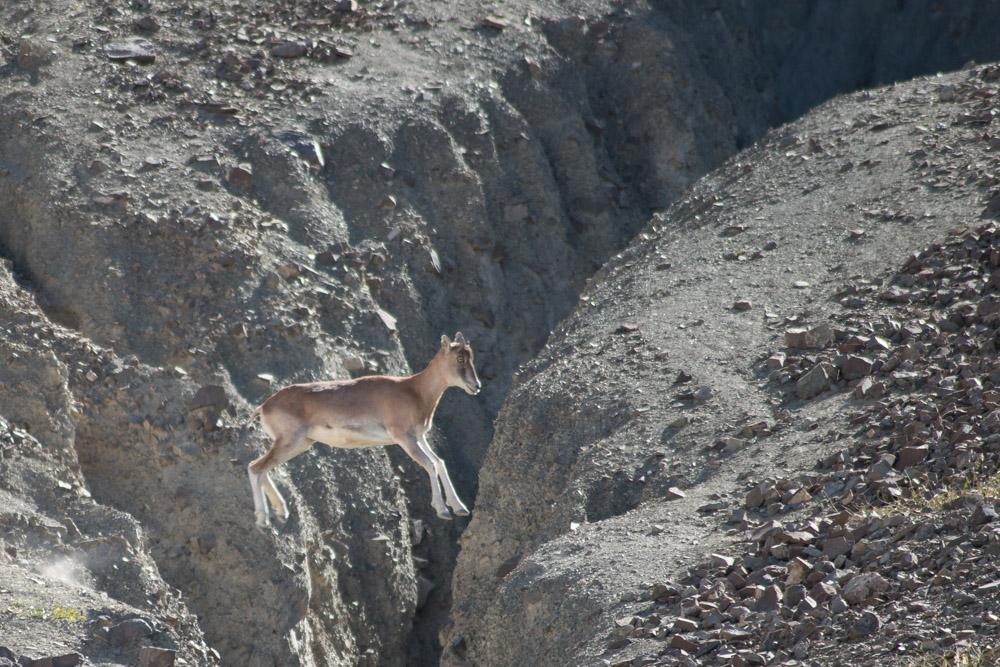 Ladakh_2015-163