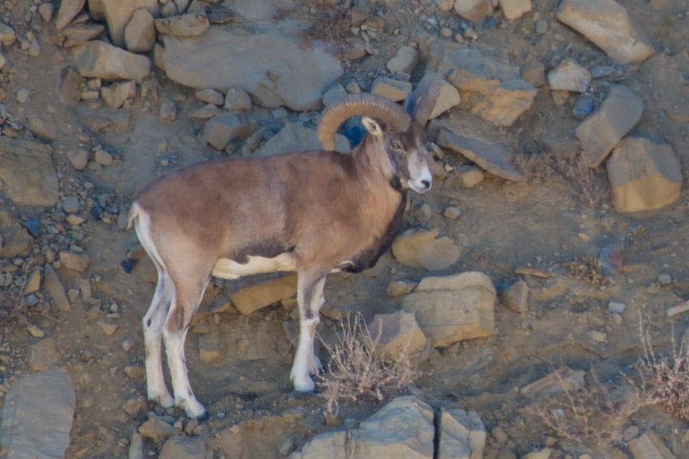 Ladakh_2015-173
