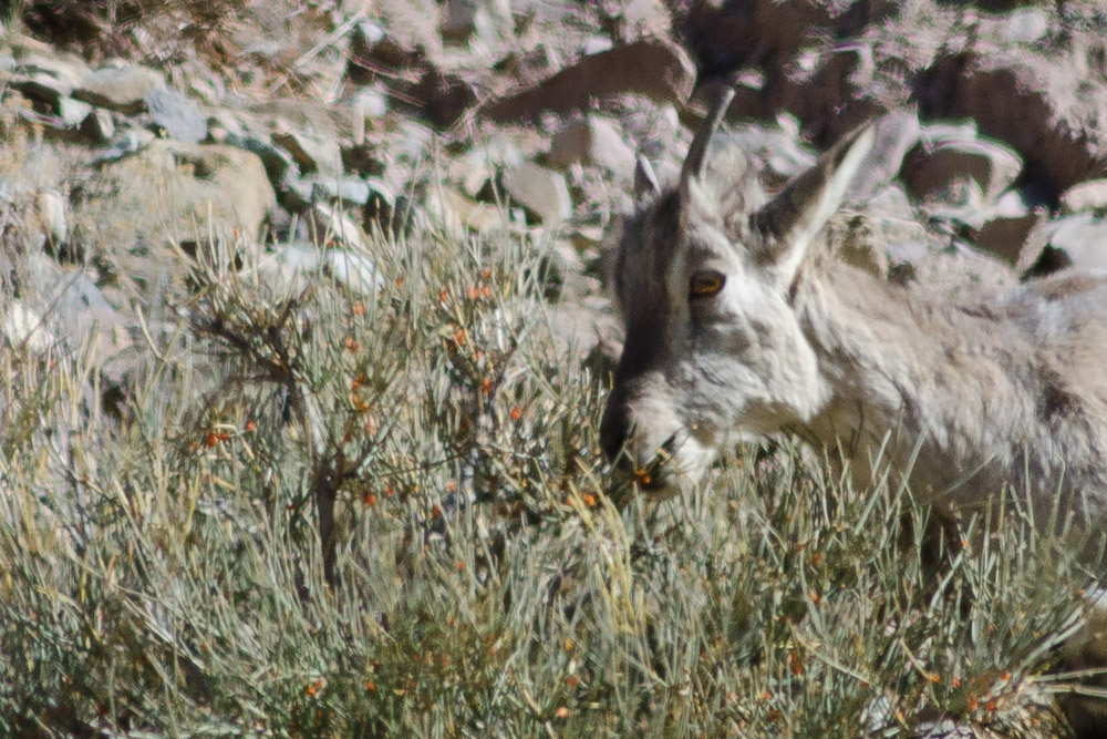 Ladakh_2015-197