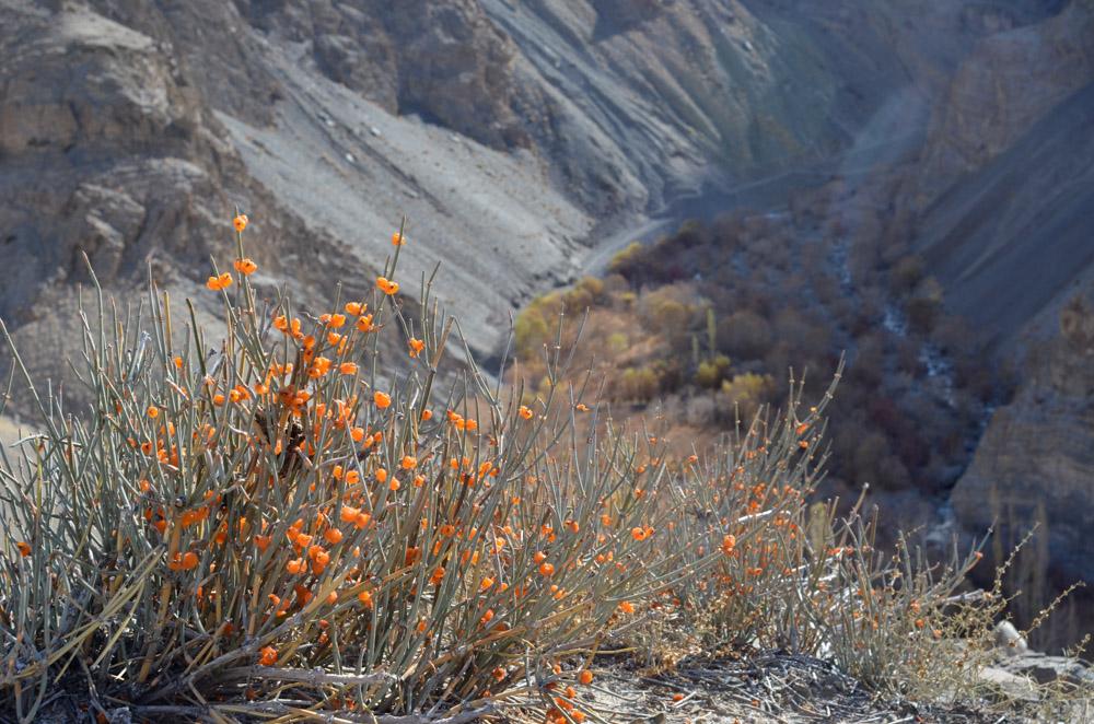 Ladakh_2015-198
