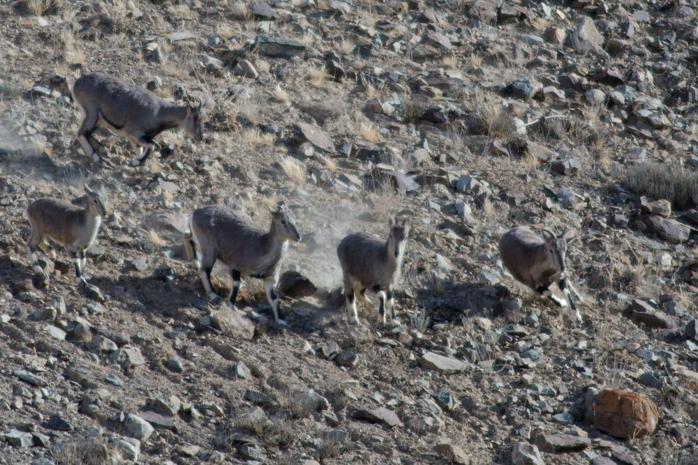 Ladakh_2015-200