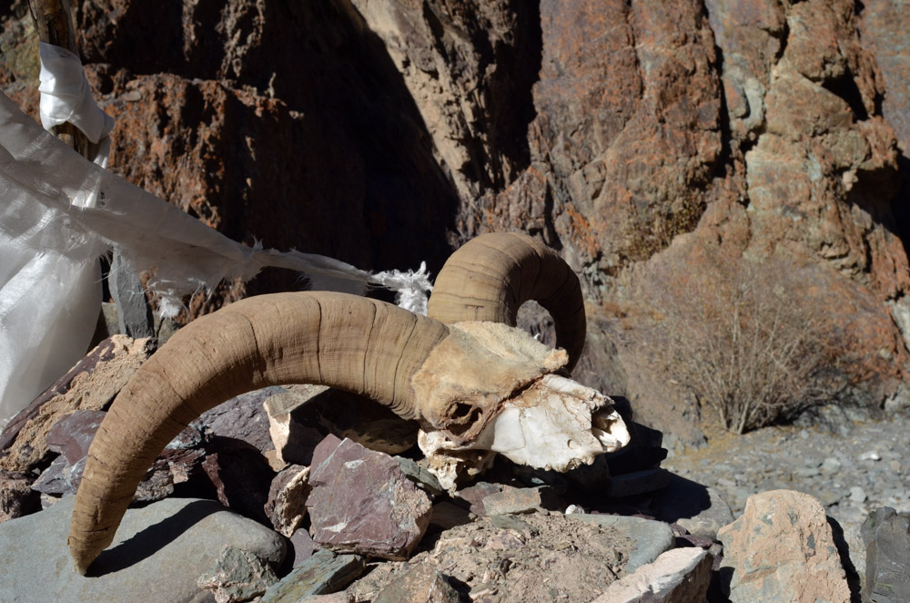 Ladakh_2015-210