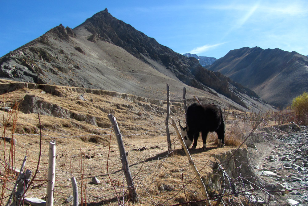 Ladakh_2015-215