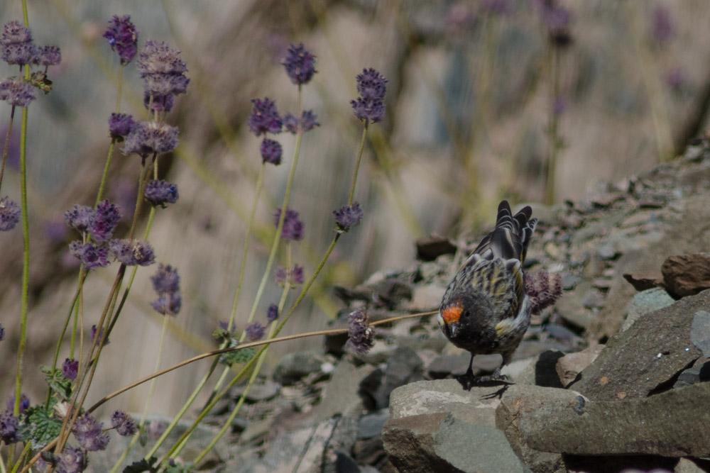 Ladakh_2015-223