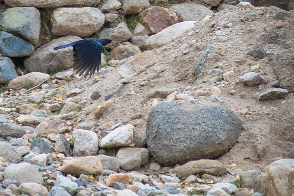 Ladakh_2015-27