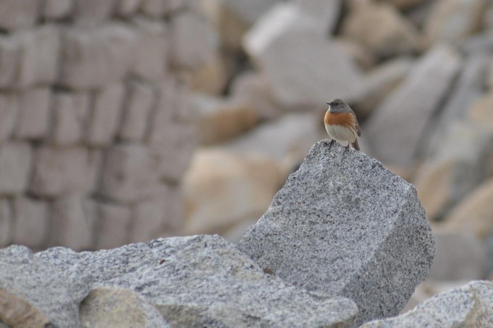 Ladakh_2015-29