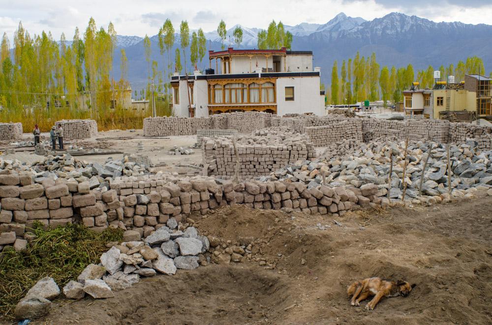 Ladakh_2015-31