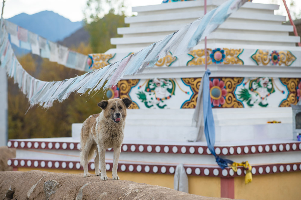Ladakh_2015-32