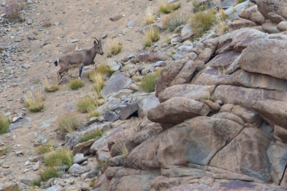 Ladakh_2015-40