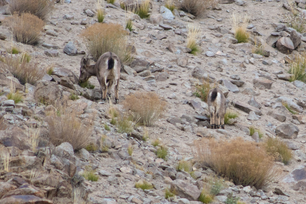 Ladakh_2015-41