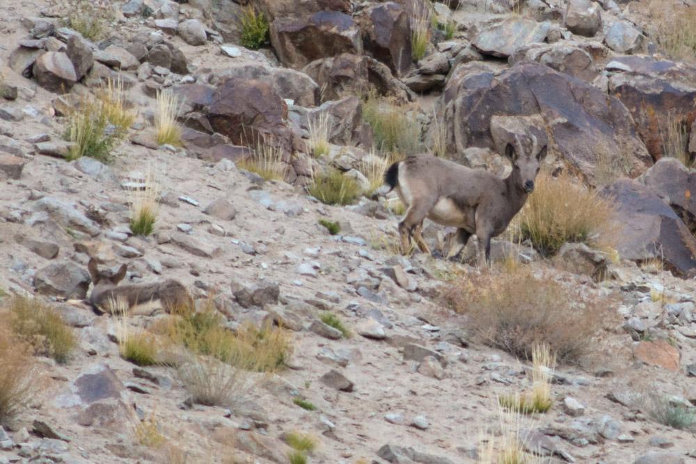 Ladakh_2015-43