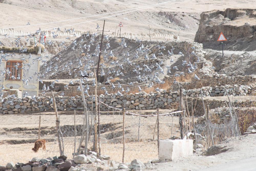 Ladakh_2015-86