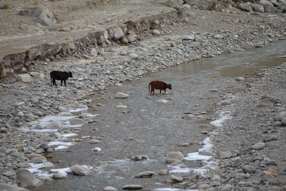 Ladakh_2015-88
