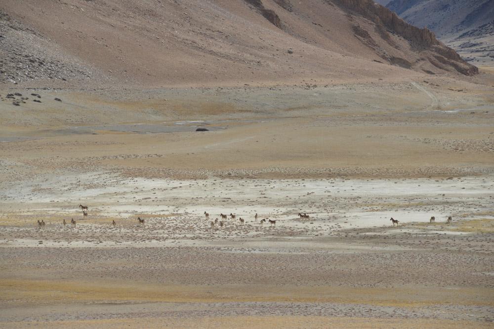 Ladakh_2015-92
