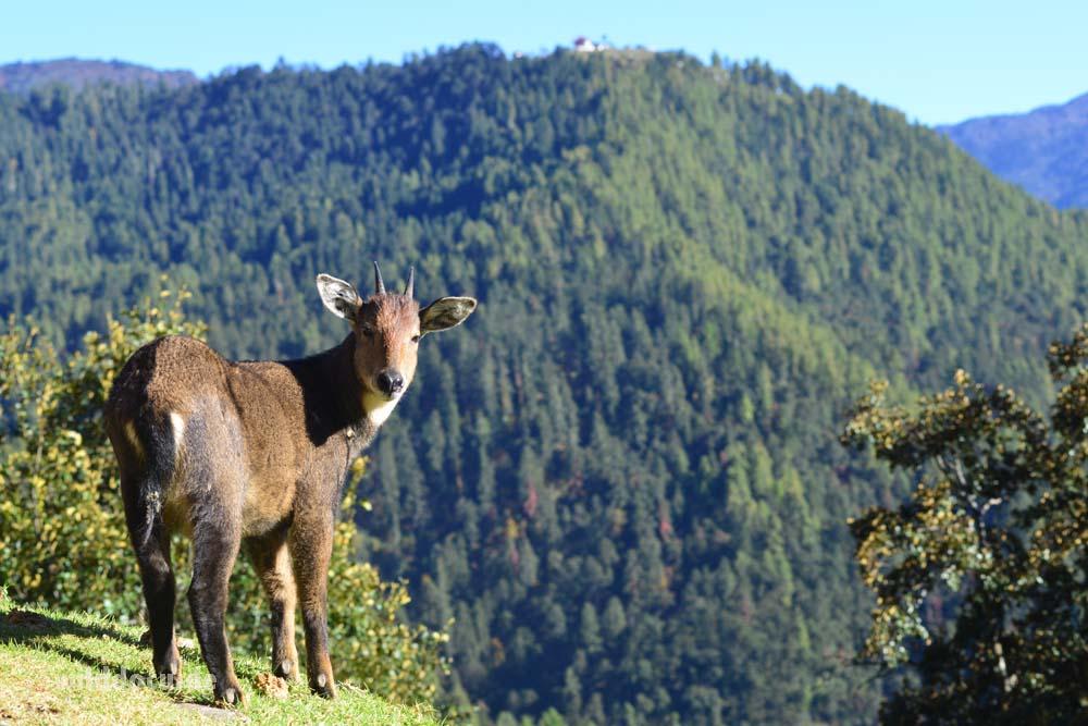 india-bhutan_2016_051
