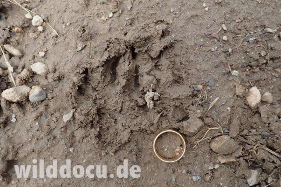 Dieses Bild hat ein leeres Alt-Attribut. Der Dateiname ist Tajikistan_2020_114-960x641.jpg