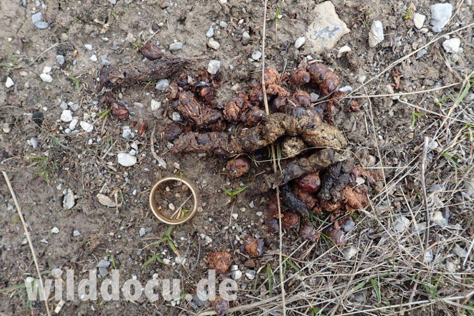 Dieses Bild hat ein leeres Alt-Attribut. Der Dateiname ist Tajikistan_2020_115-960x641.jpg