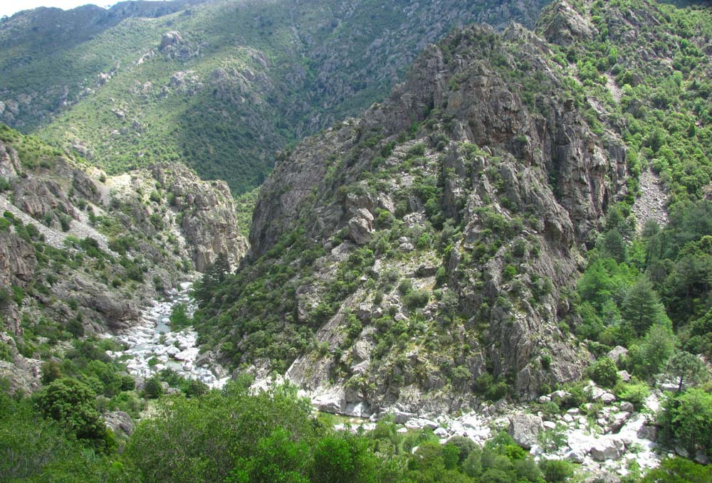 Corsica In May A Fauna Trip Report Ralfs Wildlife And Wild Places